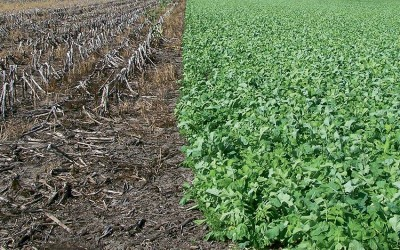 2015 survey results show steady increase in cover crops