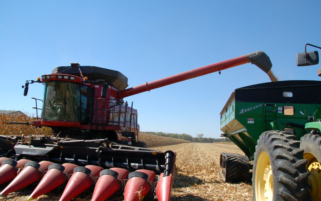 Gift of Grain Contest