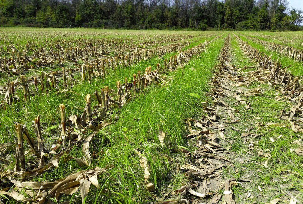 Survey Shows Indiana Remains a Top State for Cover Crops