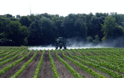 EPA Dicamba Ruling Raises Spirits, Questions, and Concerns